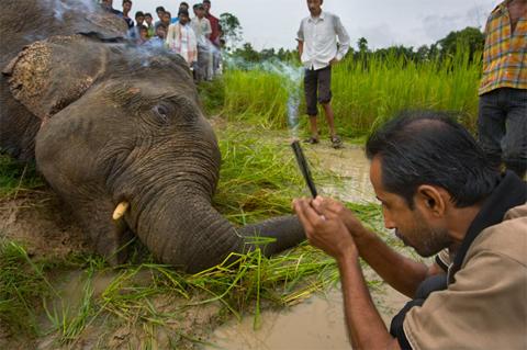 Một người thắp hương để bày tỏ sự kính trọng trước xác một con voi chết.