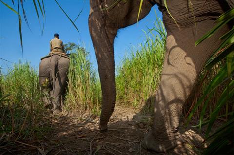 Nhân viên bảo vệ đi bộ, cưỡi voi hoặc cưỡi thuyền khi tuần tra.