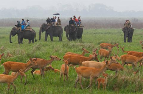 Du khách cưỡi voi để ngắm đàn