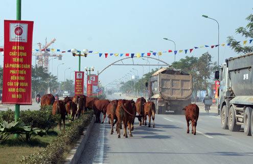 duong-le-van-luong-1-705124-1368799056_5