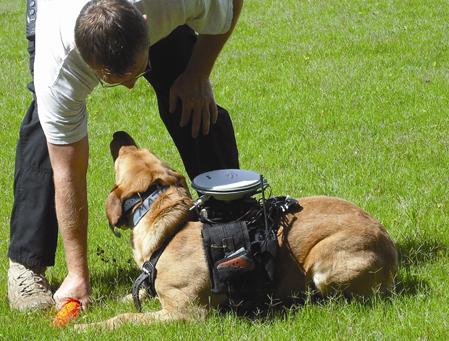 Các nhà khoa học thử nghiệm hệ thống điều khiển từ xa với một con chó có tên Major. Ảnh:
