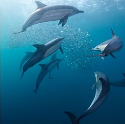 Những con cá heo
