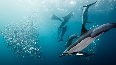 Với những con cá heo non, đây là thời điểm tuyệt vời để quan sát hoặc thực hành kỹ năng săn mồi.