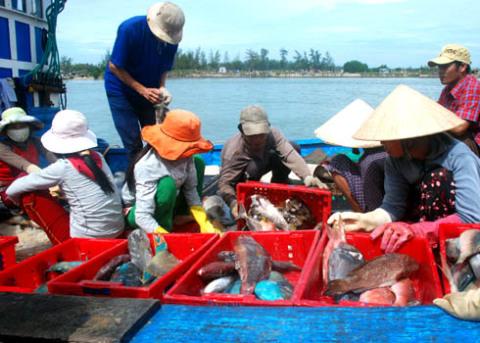 Ngư dân chuyển cá đánh bắt từ vùng biển Hoàng Sa lên cảng Sa Kỳ, xã Bình Châu, huyện Bình Sơn(Quảng Ngãi) tiêu thụ. Ảnh: Trí Tín