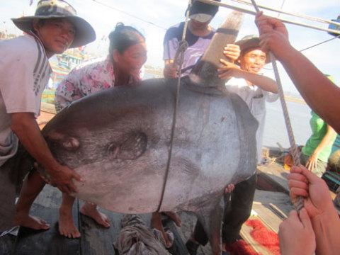 con cá quý hiếm được gia đình ông Cần tặng cho bảo tàng phục vụ công tác nghiên cứu. Ảnh: Bùi Cương