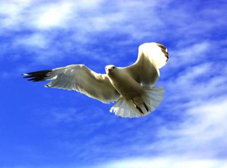 Một con chim hải âu. Ảnh: opera.com.