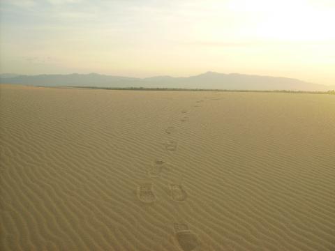 Chang chang cồn cát (Xã Quang Phú - TP.Đồng Hới)