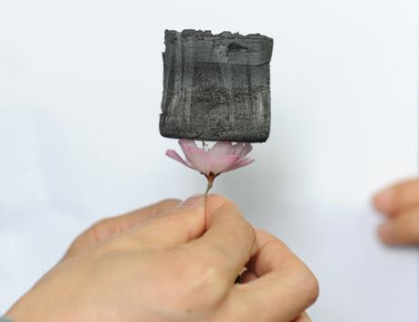 Một miếng carbon aerogel nằm trên bông hoa và những cánh hoa không cong. Ảnh: