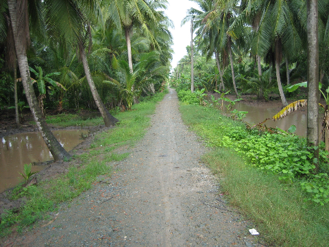 Chiều Mưa Xứ Dừa