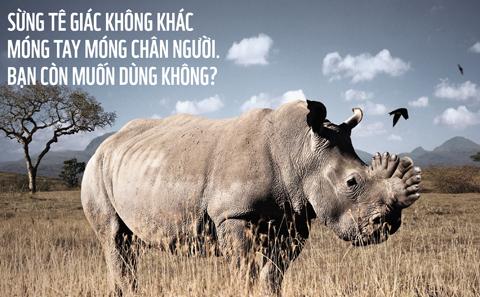 Hình ảnh mới về tê giác với chiếc sừng được thay thế bằng