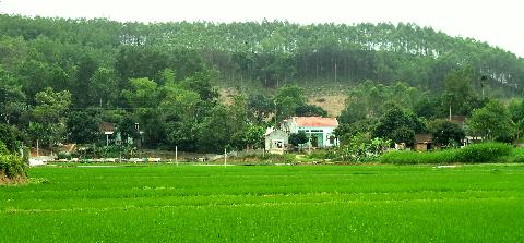 Những ngôi nhà ấm áp bên đồng ruộng và cây cối tốt tươi