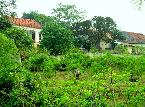 Chăm sóc vườn cây quanh nhà