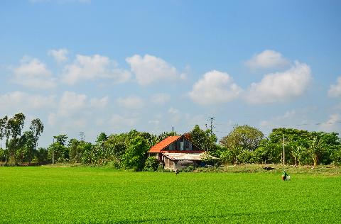 Người dân ra đồng bón phân cho lúa