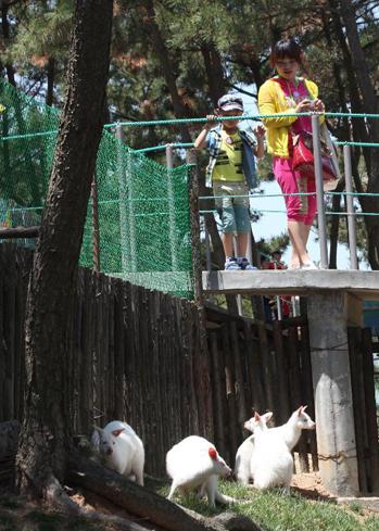 Nhiều du khách, nhất là các em nhỏ rất thích thú khi ngắm nhìn Kangaroo với bộ lông trắng muốt.