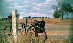 Đạp xe khắp Canberra yên bình
