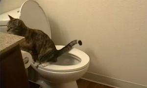 Mèo ngồi bồn cầu đi vệ sinh như người