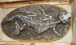 Hơn 200 trứng khủng long bị giấu ở gầm cầu thang nhà