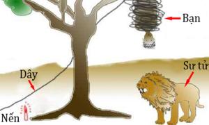 Người IQ cao mới nghĩ ra cách thoát khỏi sư tử, còn bạn?