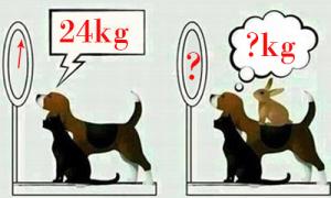 Chó, mèo và thỏ có tổng cân nặng là bao nhiêu?