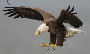 Làm sao nhốt 5 con chim vào 4 lồng, số chim mỗi lồng bằng nhau?