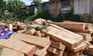 Hải quan phân trần 100 phách gỗ trong khuôn viên trụ sở