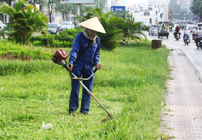 cắt cỏ bằng máy đeo vai