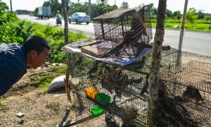 Con đường chuyên bán rắn, chuột cho 'dân nhậu' Sài Gòn