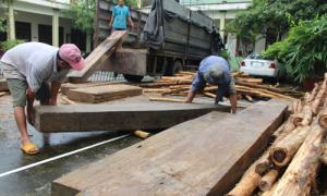 Xe chở gỗ lậu được ngụy trang bằng keo tràm