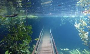 Khu bảo tồn biến thành thủy cung do nước sông tràn bờ
