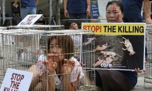 Nỗ lực xóa bỏ ngành công nghiệp thịt chó ở Hàn Quốc