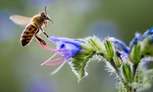 Thảm họa nếu toàn bộ côn trùng tuyệt chủng