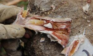Cách người tiền sử bảo quản tủy xương