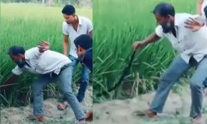 Màn bắt rắn 'khủng' gây kinh động ruộng lúa