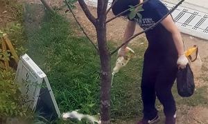 Lãnh án vì đánh chết con mèo