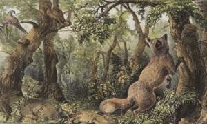 Có bao nhiêu con vật trong bức tranh 150 năm tuổi?