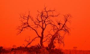 Australia mịt mù trong 'bão lửa' cháy rừng