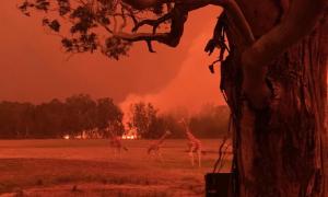 Lao vào biển lửa cứu động vật trong sở thú