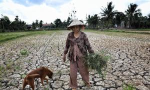 5 tỉnh miền Tây công bố tình huống hạn mặn khẩn cấp