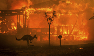 Lý do cháy rừng ở Australia ngày càng khốc liệt