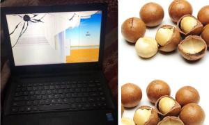 Khổ chủ 'kêu trời' vì cháu gái dùng laptop kẹp hạt mắc ca