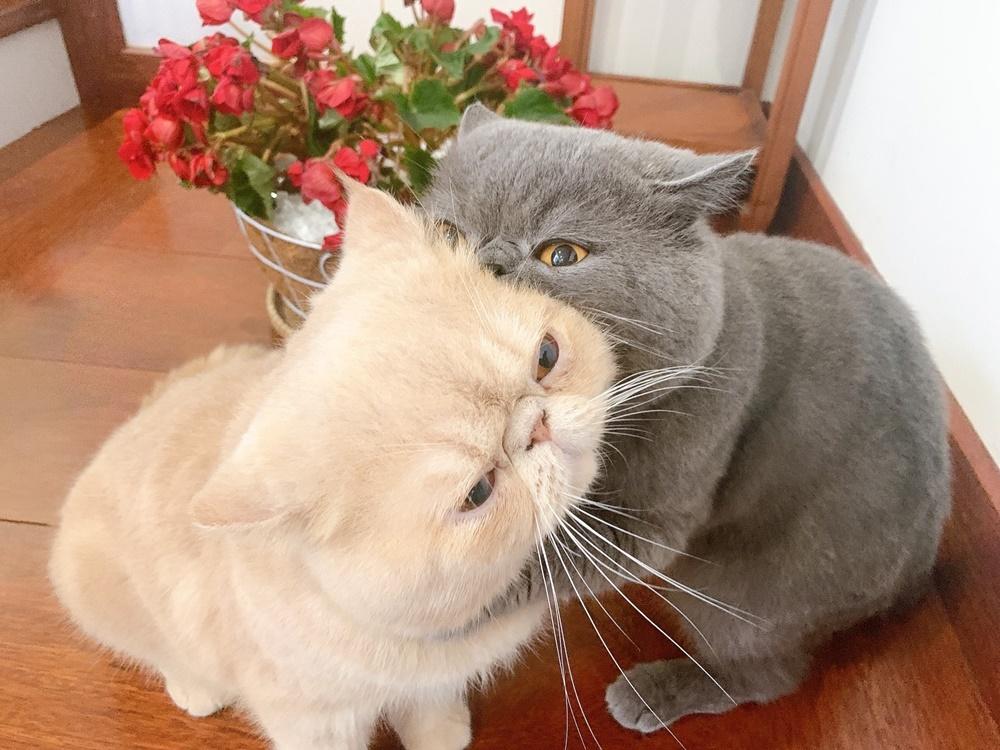 Hai anh em rất yêu thương nhau, trừ những lúc giành đồ chơi là ghẹo nhau tí thôi... ^^