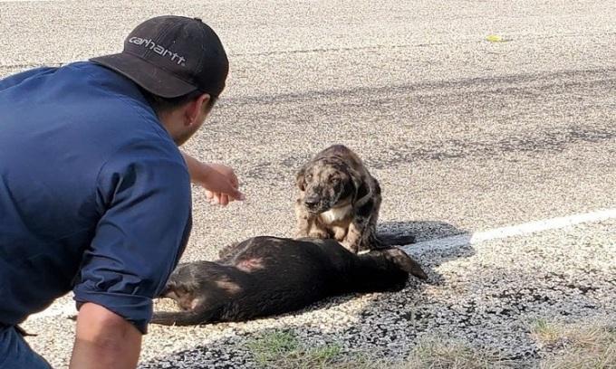 Chó ngồi canh xác đồng loại