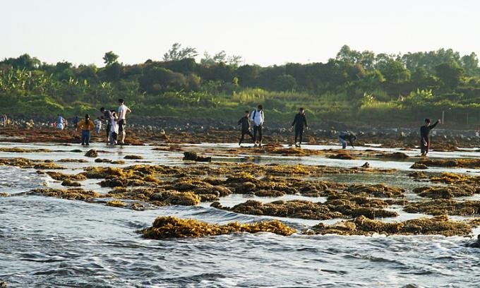 Bãi san hô ở Gành Yến bị giẫm đạp