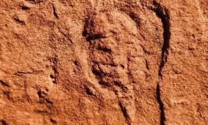 Hóa thạch động vật 460 triệu năm tuổi