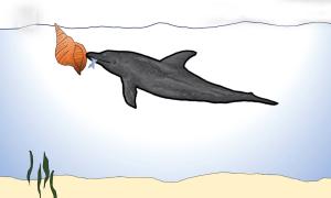 Cá heo học cách bẫy cá trong vỏ ốc