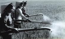 Vòng xoáy thuốc trừ sâu trên những cánh đồng