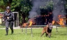 Nữ cảnh sát duy nhất huấn luyện chó nghiệp vụ