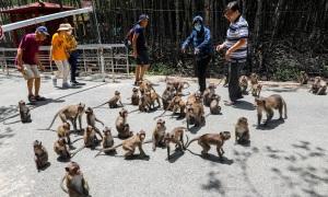 Khu du lịch có hàng nghìn con khỉ ở Cần Giờ