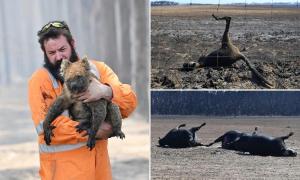 3 tỷ động vật bị ảnh hưởng bởi cháy rừng ở Australia