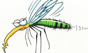 Muỗi thường làm gì buổi sáng?